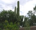 cells.eaglemountain.shea.larson_cactus.20050823.P1010062.jpg