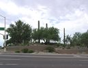 cells.eaglemountain.shea.larson_cactus.20050823.P1010065.jpg
