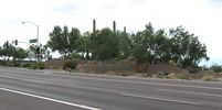 cells.eaglemountain.shea.larson_cactus.20050823.P1010068.jpg