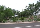 cells.eaglemountain.shea.larson_cactus.20050823.P1010073.jpg