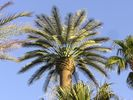 cells.palmdesert.stmargaretsepisocpal.cellpalm.crown.NoAntArms.20051022.PA220021.jpg